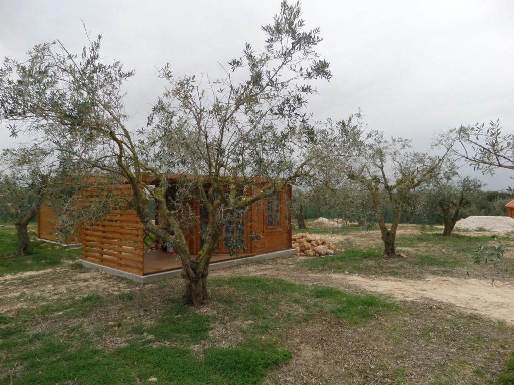 Vineyard near Cartaxo, Portugal